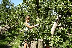 Organic Farming Jobs in Australia