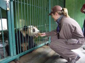 Volunteer to Work with Pandas